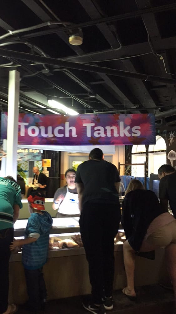 Lots Of Cool Animals In The Touch Tank Yelp