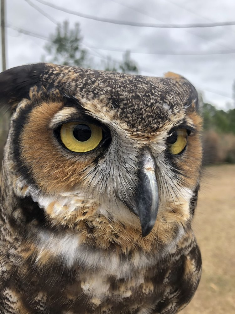 Freedom Ranch Wildlife Center: 1091 Howell Rd, Purvis, MS
