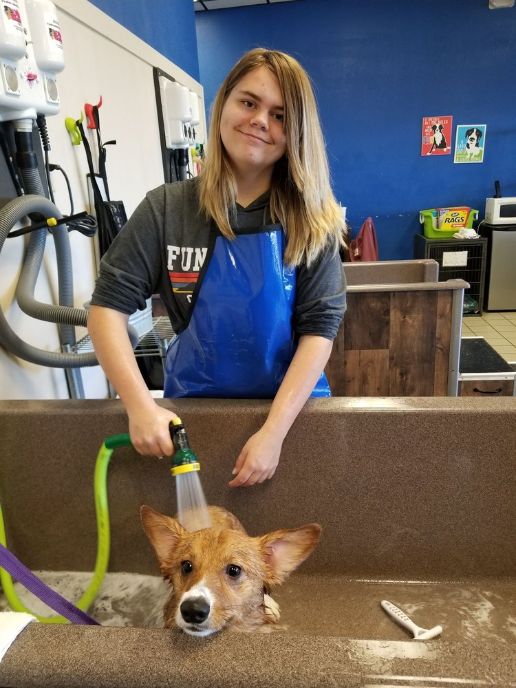 Happy K9 Self-Serve Dog Wash & Grooming