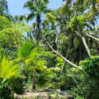 Photo Of Sarasota Jungle Gardens   Sarasota, FL, United States