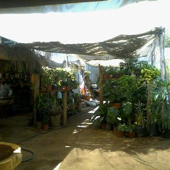 Viveros leslie viveros y jardiner a blvd benito for Viveros en oaxaca