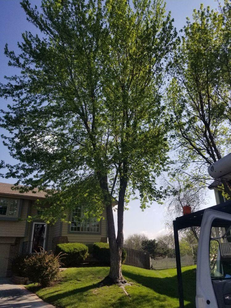 Cut & Grind Tree Care: 16626 Miami St, Omaha, NE