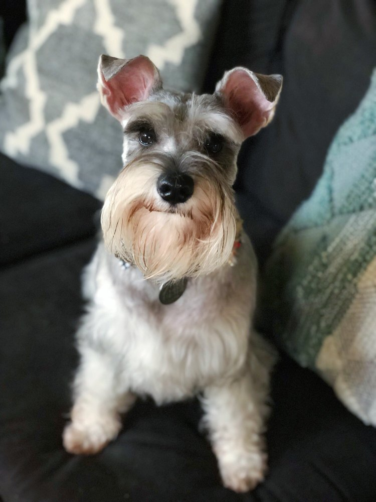 Pup Culture Pet Spaw