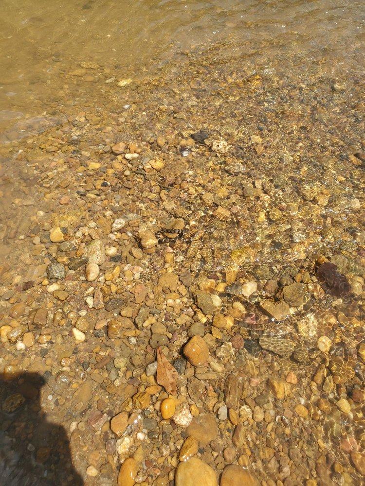 Limestone Park Canoe Rental: 1531 Limestone Pkwy, Brierfield, AL