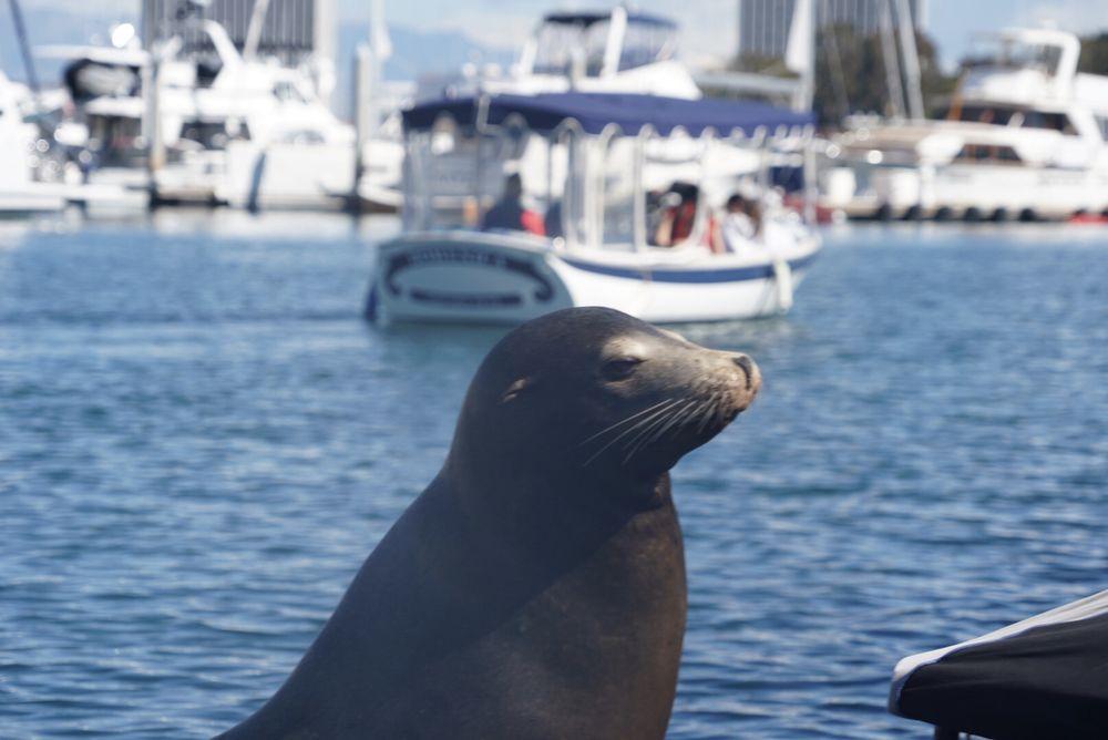 The Electric Voyage - Marina Del Rey: Marina Del Rey, CA