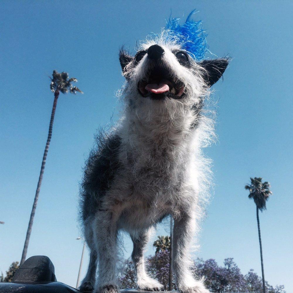 Moon Doggy's Grooming