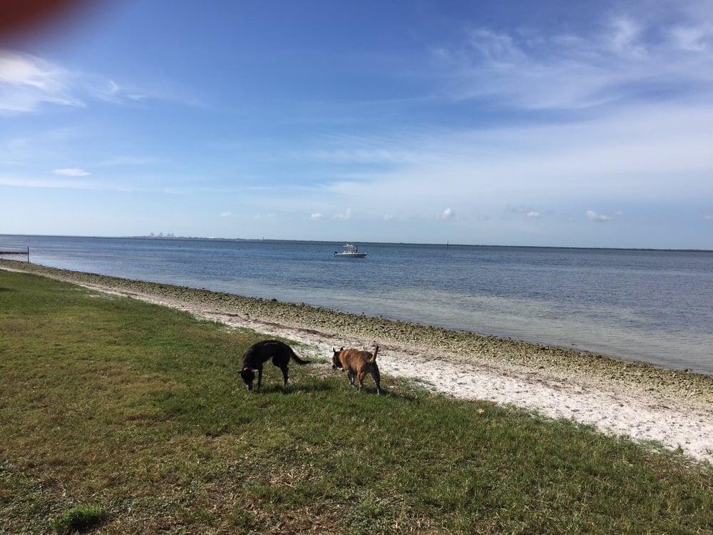 Nice Dog Beach Here In Tampa Yelp