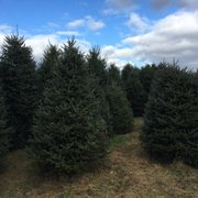 Helpful Hints From Photo Of Mayneu0027s Tree Farm   Buckeystown, MD, United  States. Christmas Trees