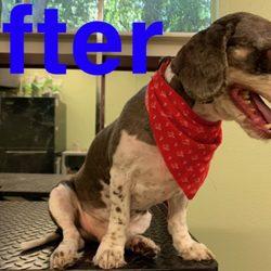Family Pet Retreat - 69 Photos & 14 Reviews - Pet Groomers