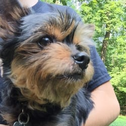 Nc Yorkie Rescue Animal Shelters Greensboro Nc Phone Number