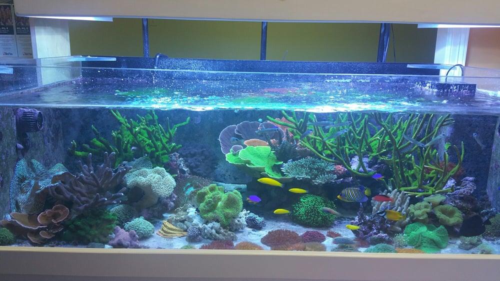 Amazing aquariums reefs 24 photos aquarium for Fish tank cleaning service near me