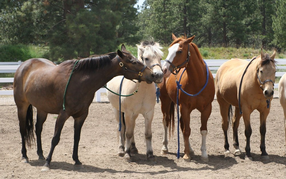 Healing Reins Therapeutic Riding Center: 60575 Billadeau Rd, Bend, OR