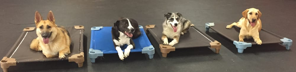 Dog On It Training and Rehabilitation: Omaha, NE