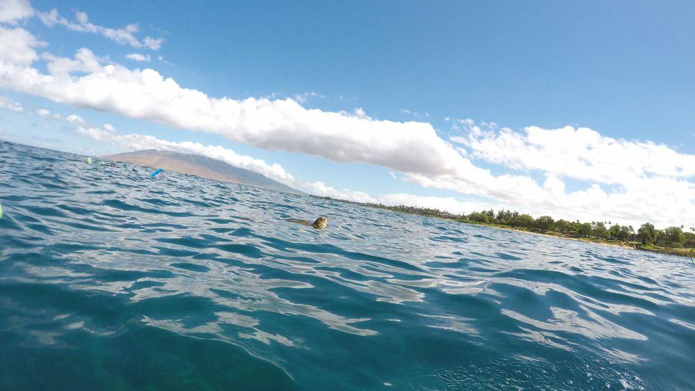 Maui Reef Adventures: 11 Ma'alaea Harbor Rd, Ma'alaea, HI