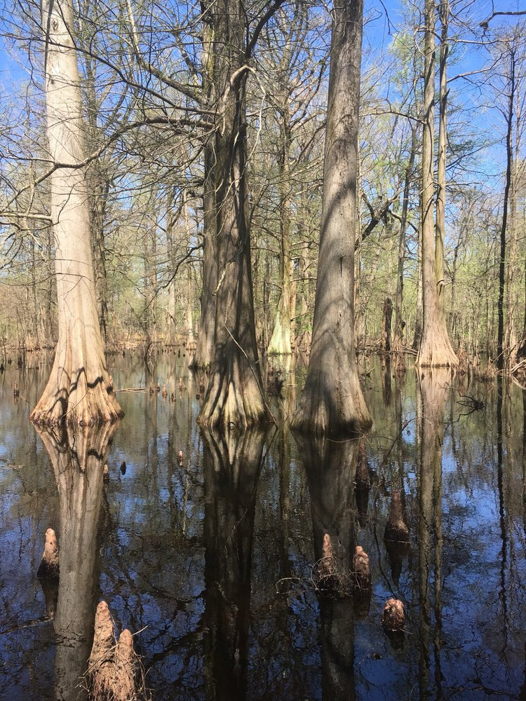 Greenville Cypress Preserve: Corner Hwy 82 and Cypress Lane, Greenville, MS