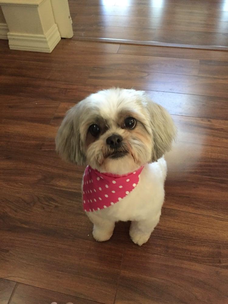 Auburn Ca Dog Grooming