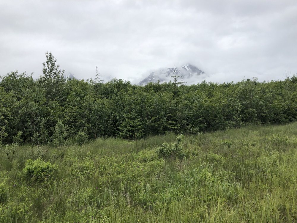 Bardy's Trail Rides: Lot 12 Old Nash Rd, Seward, AK