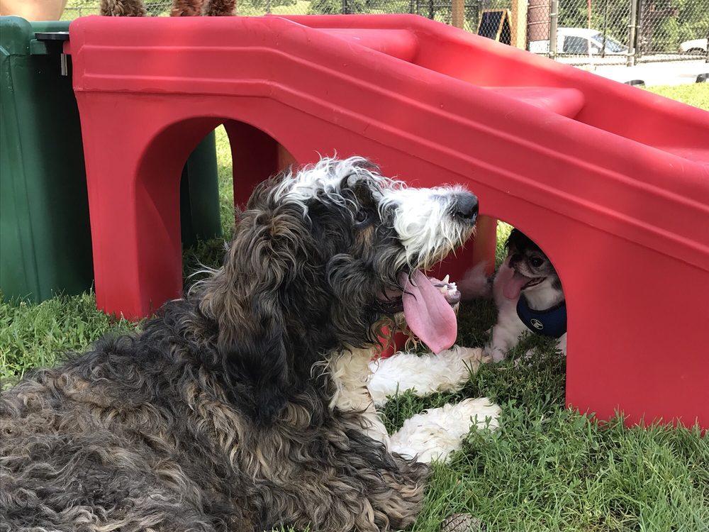 Olney Manor Dog Park