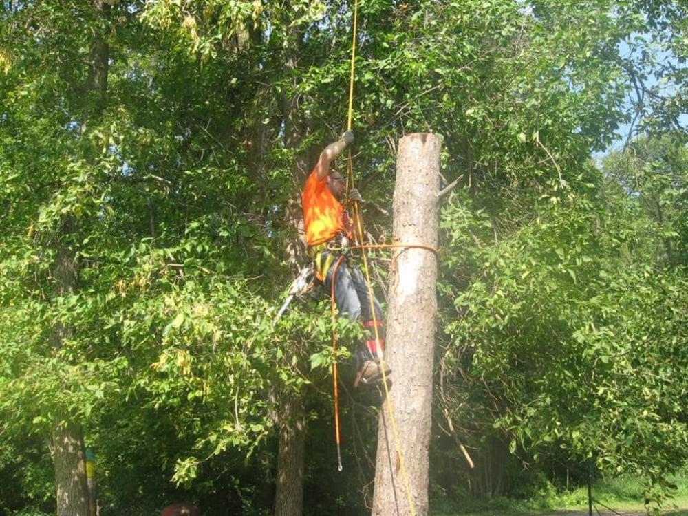 Weaver's Tree Service: Avon MN, MN