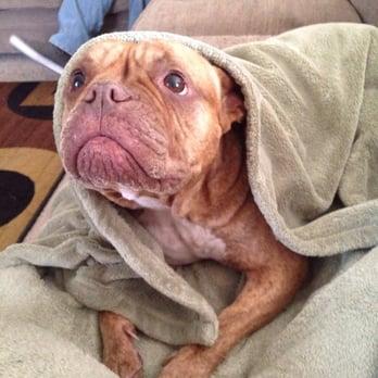 Photo Of Doggie Door   Goodyear, AZ, United States. My Olde English Bulldogg