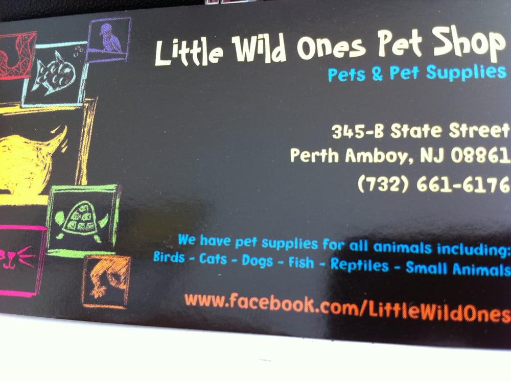 little wild ones pet shop   pet stores   345 b state st