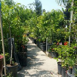 photo of temple garden center el monte ca united states huge selections - Temple Garden