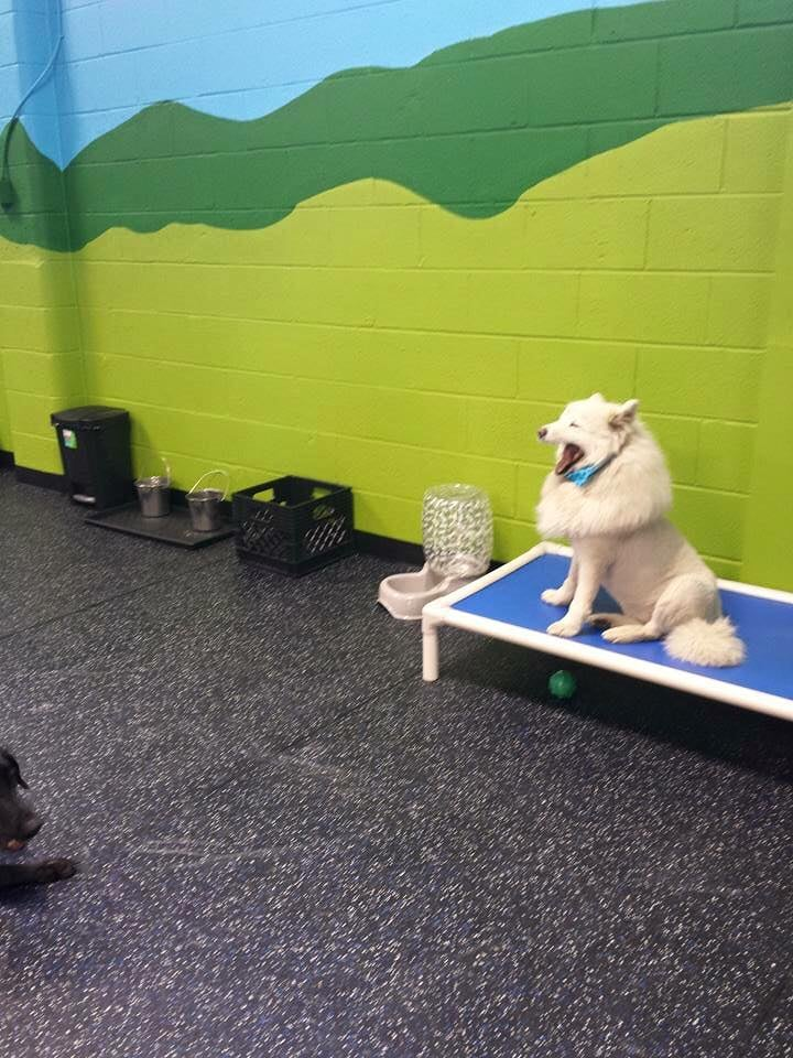 Alley Dog Grooming Edmonton