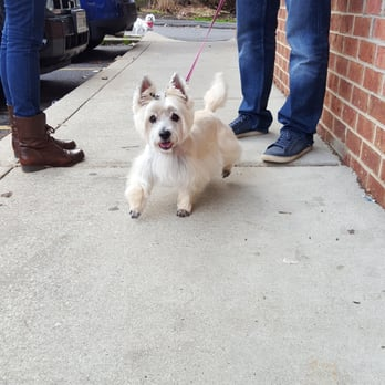 Dog Friendly Places In Annapolis Md