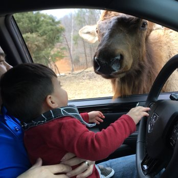 Safari In Va >> Virginia Safari Park 2019 All You Need To Know Before You Go With