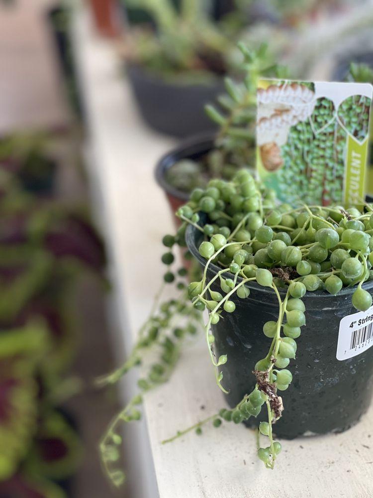 Mother - A Houseplant Boutique: 350 W A St, Dixon, CA