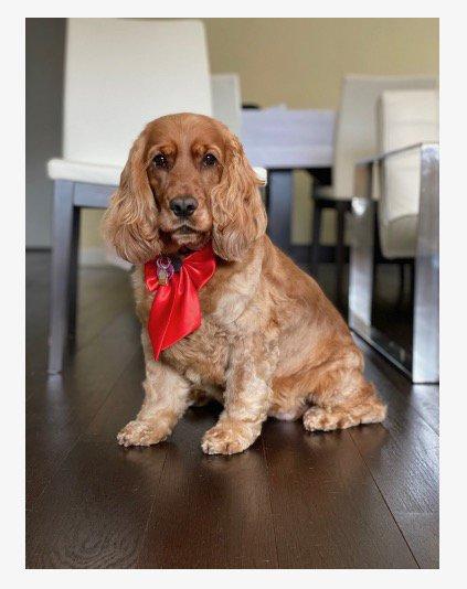 Le Pet Salon & Boutique: 15400 Biscane Blvd, Aventura, FL