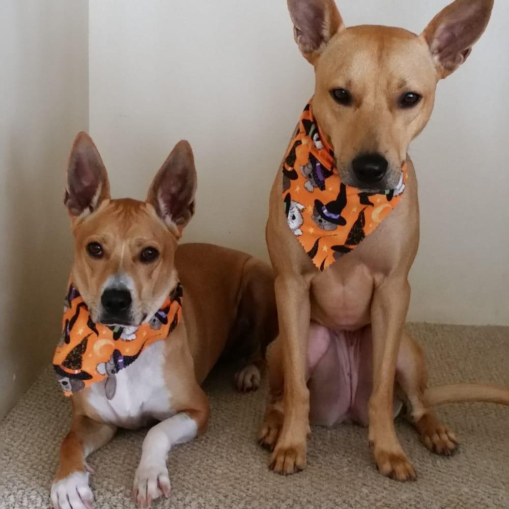 Honolulu Dog Spa