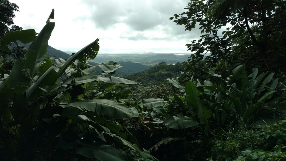 Robin Phillip's Rainforest Fruit Farm: PR 191 Km 24.2, Naguabo, PR