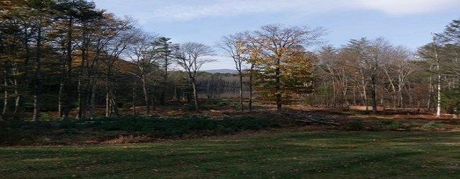 LW Tree Service: 228 Eagles Nest Rd, Hurley, NY