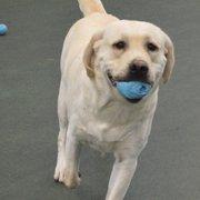Dog dayz of california 54 photos 97 reviews pet sitting 1995 dogspot solutioingenieria Gallery
