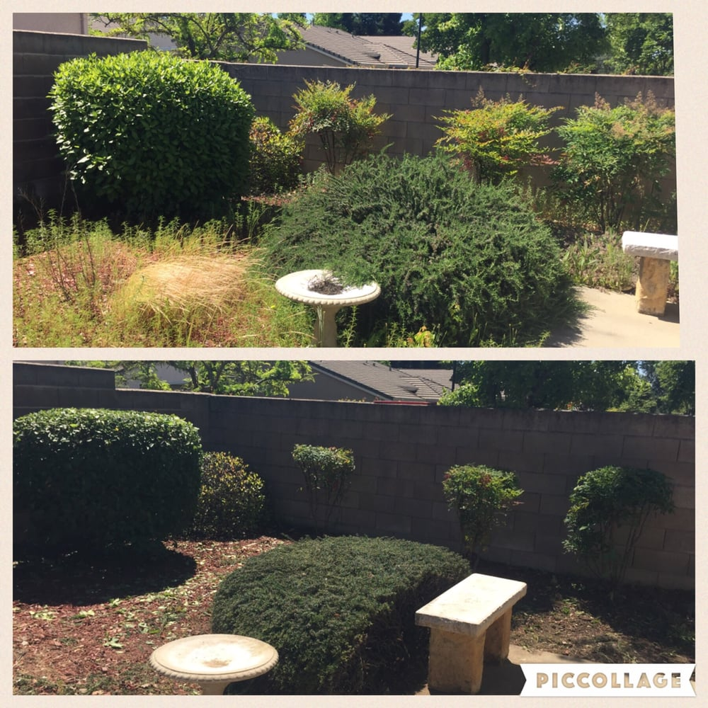 Before And After Cleaning Up Overgrown Backyard - Yelp