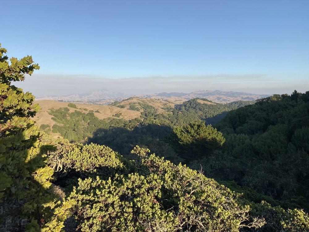 Huckleberry Botanic Regional Preserve: Skyline Blvd, Oakland, CA