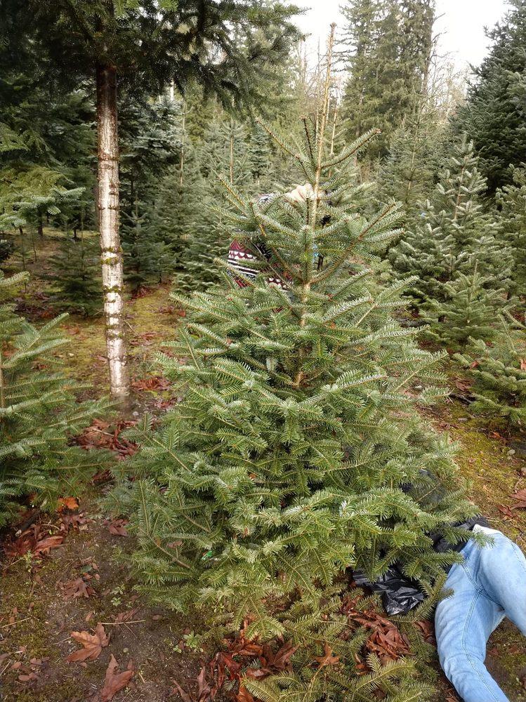 Mountain Creek Tree Farm: 6821 440th Ave SE, Snoqualmie, WA