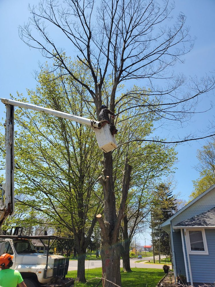 UFC Tree Care: Grand Junction, MI