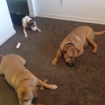 Carpet Cleaning Jacksonville Fl