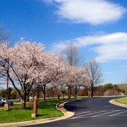 Photo Of Round Hill Inn Orange Va United States Spring Blooms In