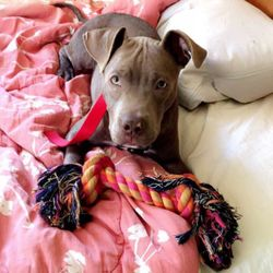 SPCA Cincinnati - Cincinnati, OH - Reviews - 3949 Colerain Ave ...