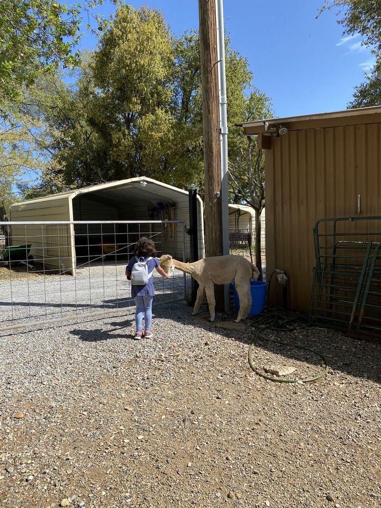 Arapaho Rose Alpacas: 10702 Arapaho Dr, Redding, CA