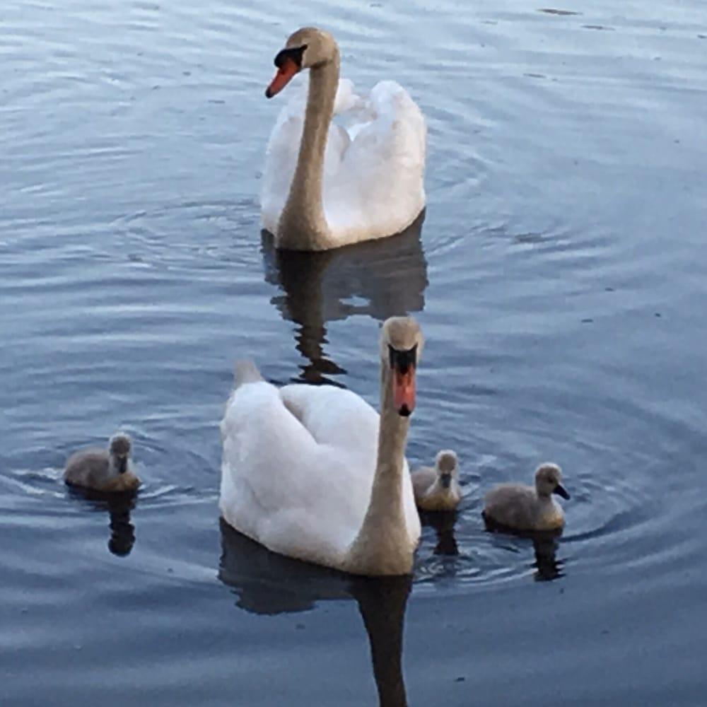 Horn Pond: Lake Street And Arlington Rd, Woburn, MA
