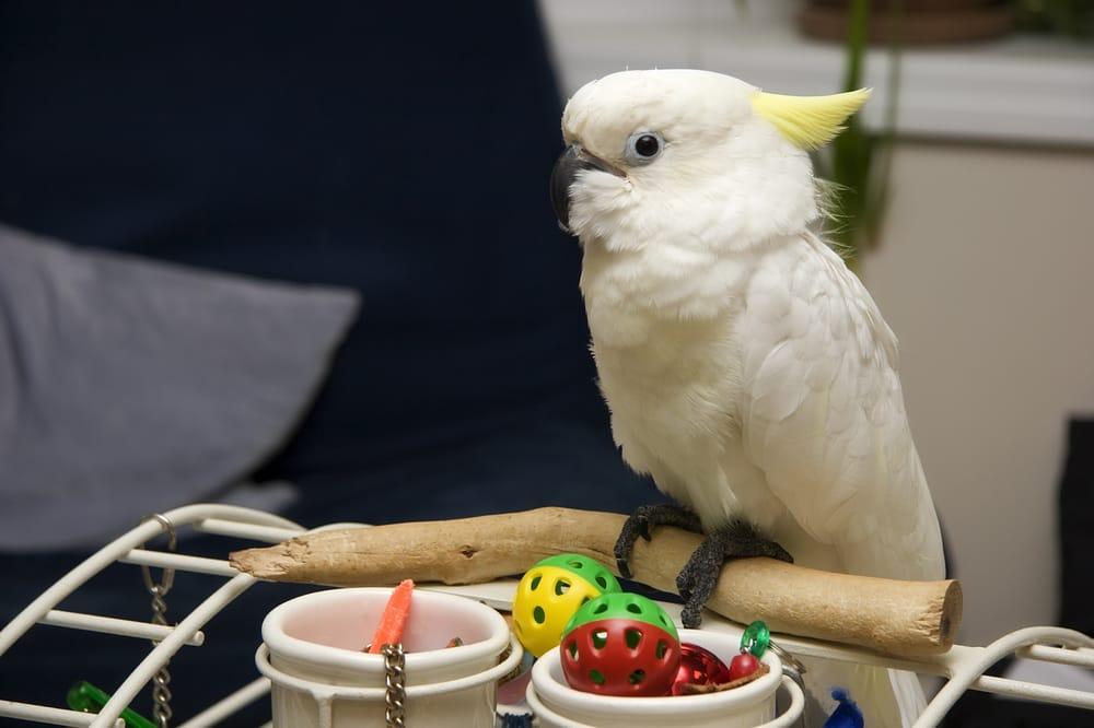 Macaws & Cockatoos: San Diego, CA
