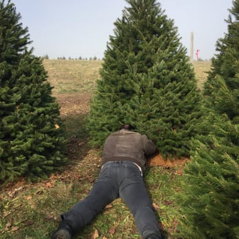 Photo of Wyckoff's Christmas Tree Farm - Belvidere, NJ, United States. Yes. - Wyckoff's Christmas Tree Farm - 29 Photos & 11 Reviews - Christmas