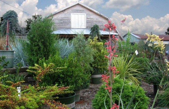 Southbranch Nursery: 2991 S Church St, Murfreesboro, TN