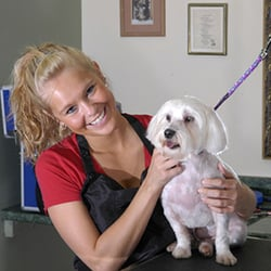 Pawsitively pampered pooch too pet groomers 349 w commercial st photo of pawsitively pampered pooch too east rochester ny united states dog dog grooming solutioingenieria Images