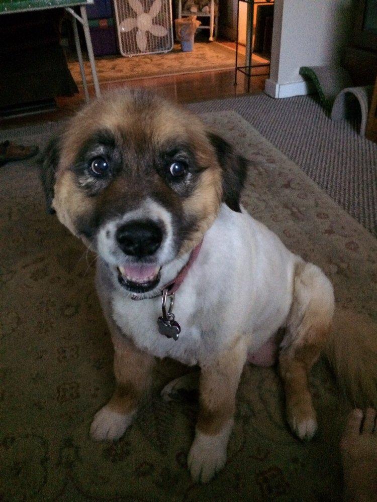 Jade's Dog Grooming: 1101 Old Chisholm Trl, Dewey, AZ