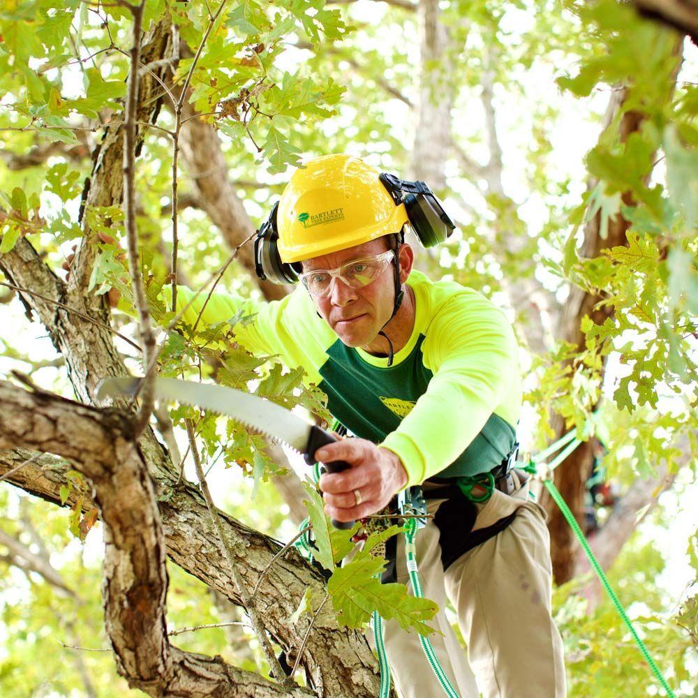 Bartlett Tree Experts: Chesapeake, VA